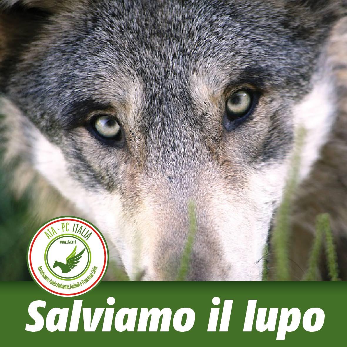 salviamo-il-lupo