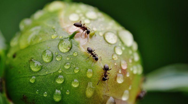 La lunga memoria delle formiche