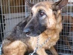 Condannato a sei mesi di reclusione un maltrattatore di animali
