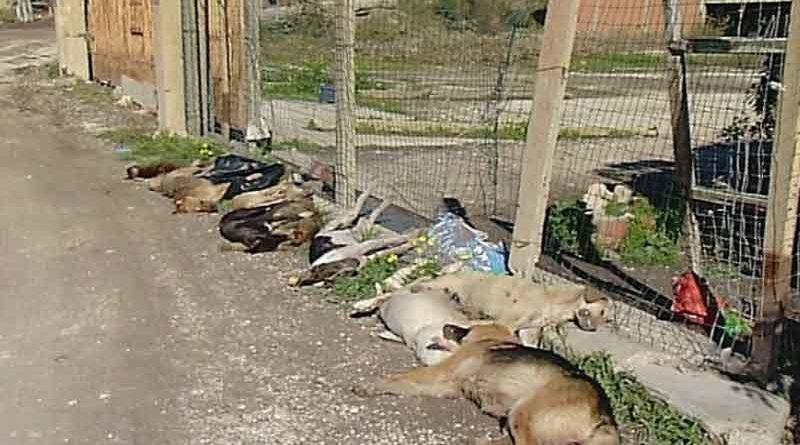 ATA-PC Italia Onlus chiede un intervento celere delle Autorità competenti per i cani morti in Sicilia