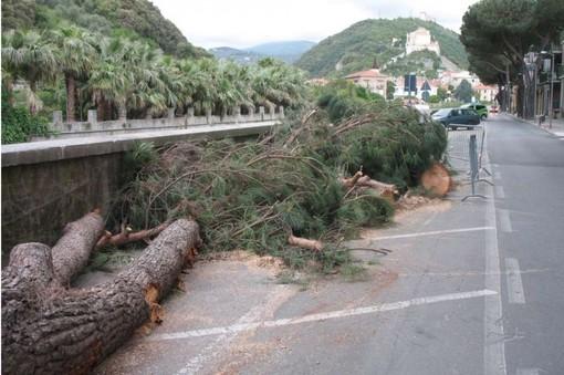 """Loano, taglio dei pini in via dei Gazzi. ATA PC: """"Intervento assurdo e inutile"""""""